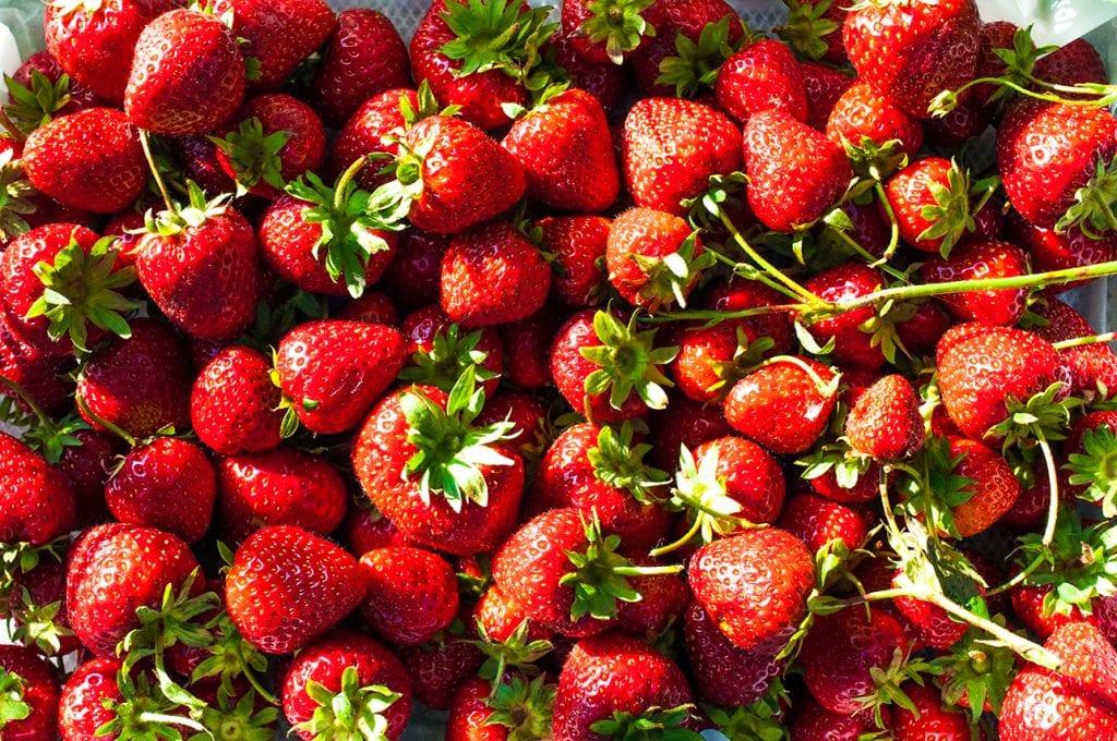 Jahody sú tukožrútske ovocie. Foto Jana Štrbková